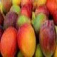 Profil de Mango