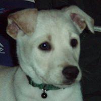 Profil de Luca